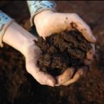 Loam soil 3