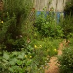 Pathway thru veg grdn w midsummer veg afrcn  wrmwd on left