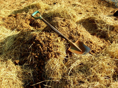 Horse manure in pile with bedding