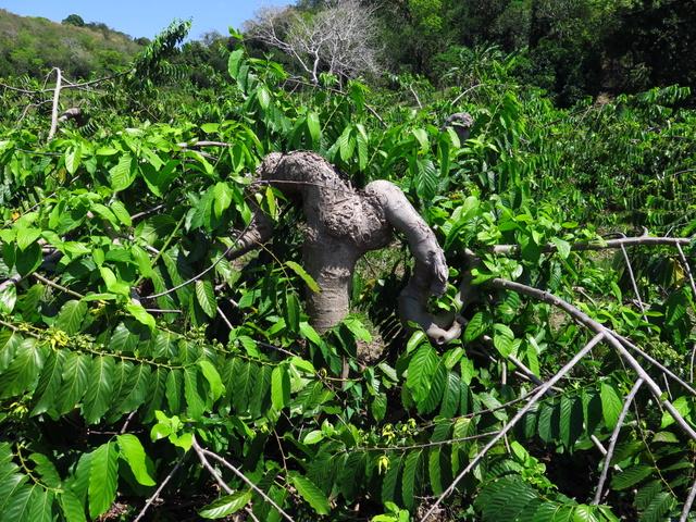 Jane's Delicious Garden Blog » Madagascan Magic