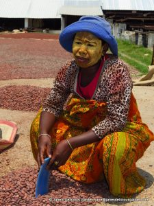Women sorting cacao beans (1)